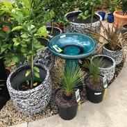 Garden2-1000px.JPEG