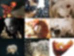 Capture d'écran 2020-01-15 à 15.58.05.