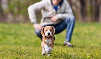 puppy-training-photo.jpg