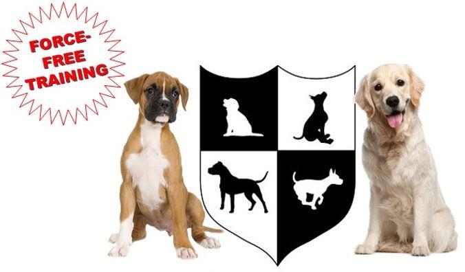 Boarding School dogs.jpg