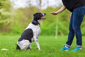 dog trainer.jpg