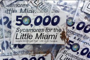 LMC Volunteers plants 50K Sycamore Seeds