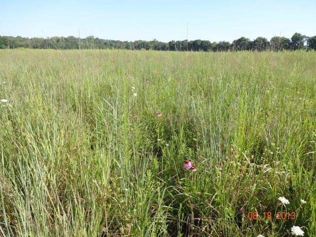 LMC Tecumseh Nature Preserve