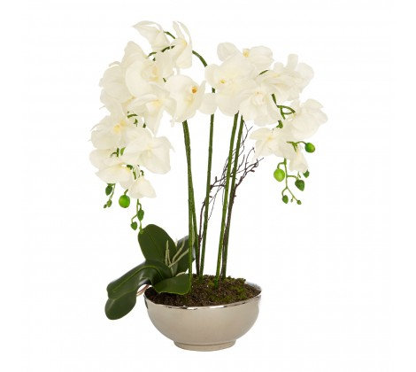 WHITE ORCHID IN NATURAL CERAMIC POT
