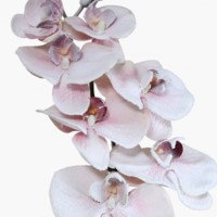 120CM PINK FROSTED ORCHID