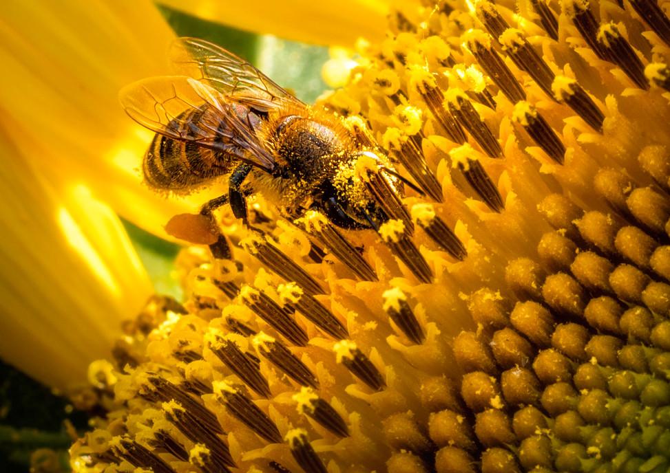 Harvest the Pollen