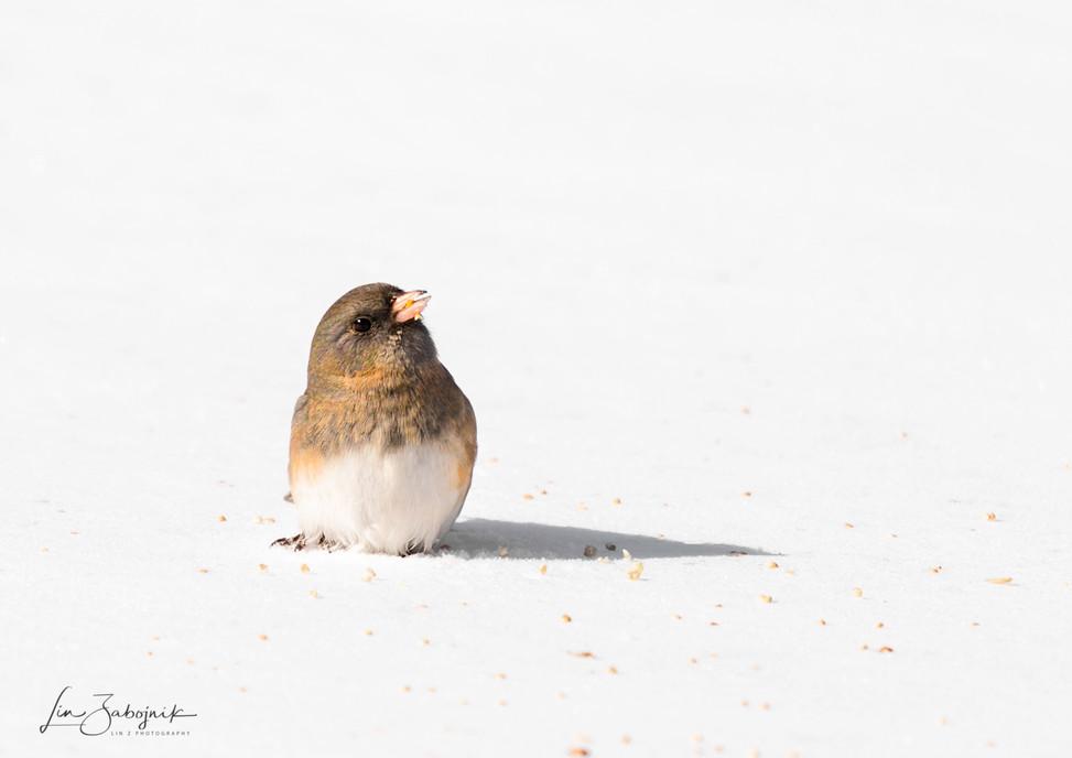 Little Snow Bird