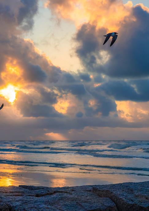 Birds at Sunrise Surf