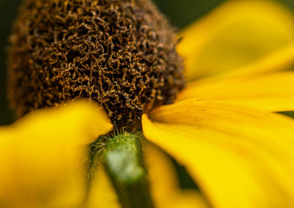 Yellow Bud closeup
