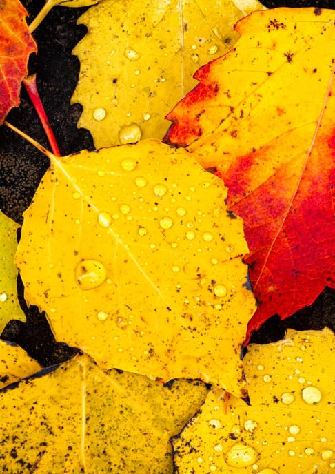 Waterdroplet Leaves
