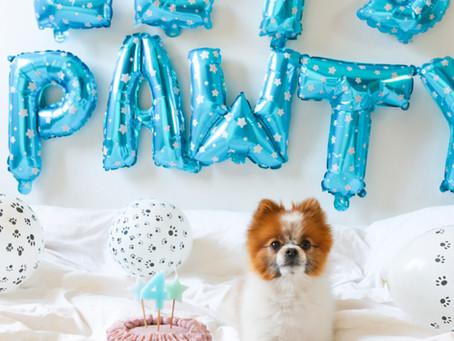 Vegansk hundtårta till Louies födelsedag!