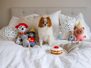 Spannmålsfri gräddtårta till hund