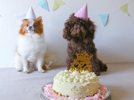 Hundtårta - recept till din hunds födelsedag