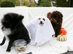 Halloween hundkex