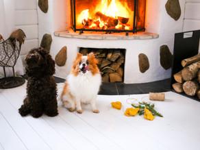 Puppy-Peppisar (pepparkakor för hundar)
