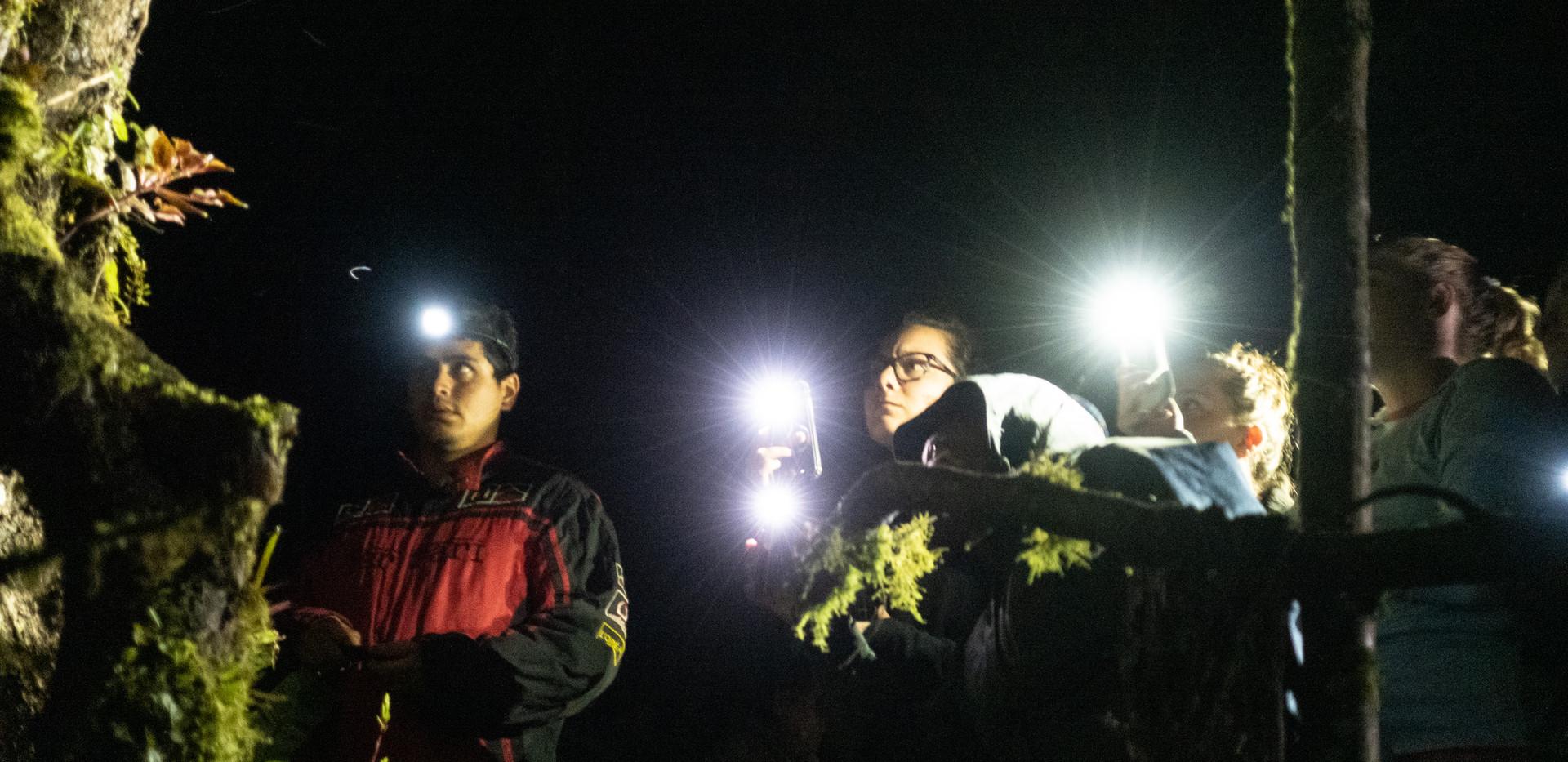 Caminatas nocturnas guiadas