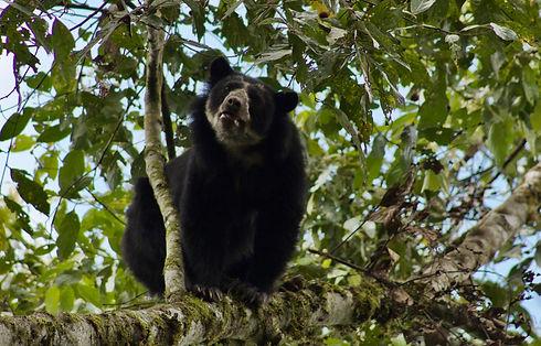 2016 Bear P.Bertogg.jpg