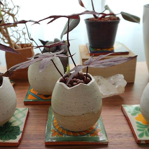 """Rebirth"" Ceramic Series - Sweet Potato HPHP"
