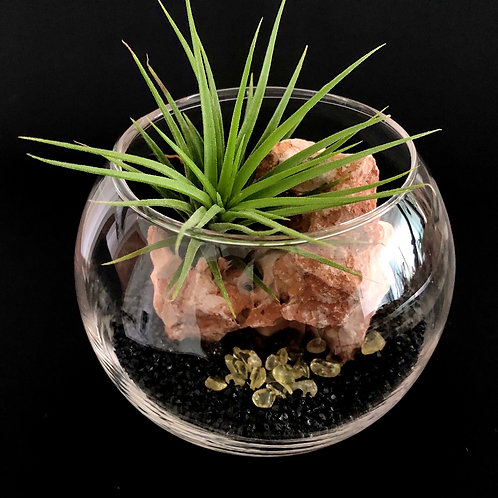 Mini Galactic Air Plant Series - Lava Rock World
