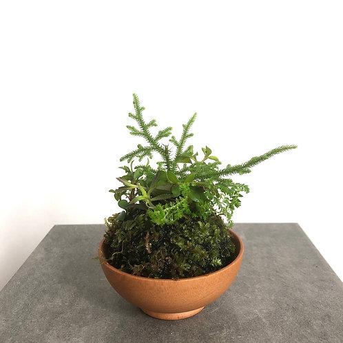 Wabi-Kusa Island Series  -  Mini Pines 2