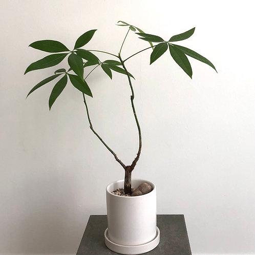 Reflection Series  -  Little Tree 1