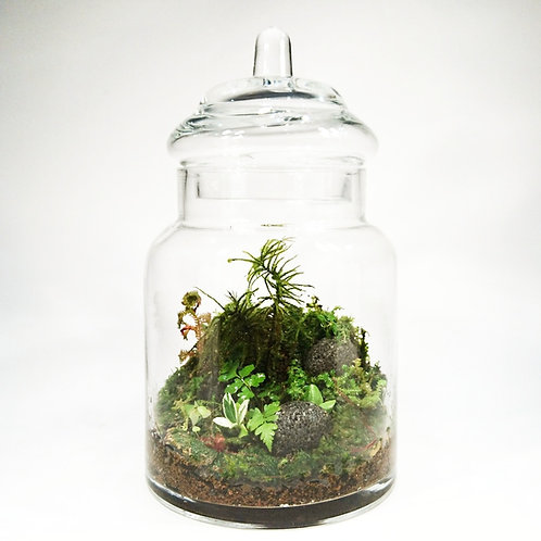 The Terrarium - Naturalist
