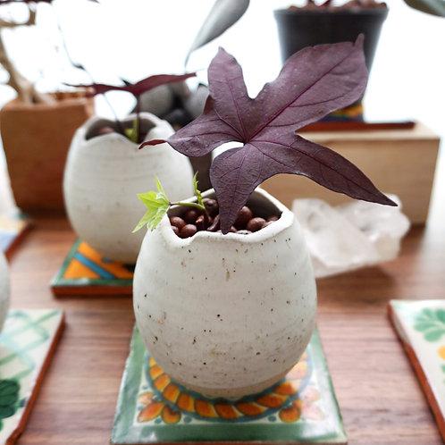 """Rebirth"" Ceramic Series - Sweet Potato Lot"