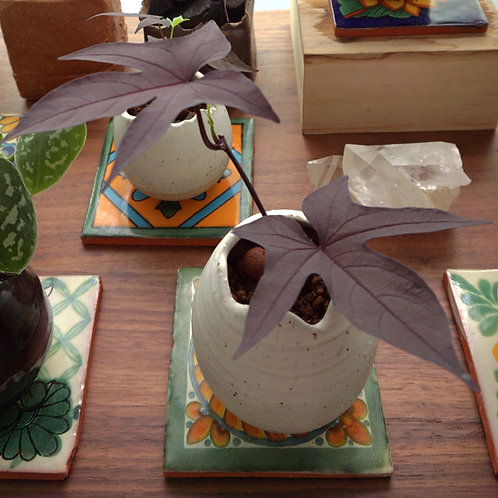 """Rebirth"" Ceramic Series - Sweet Potato Speedy"