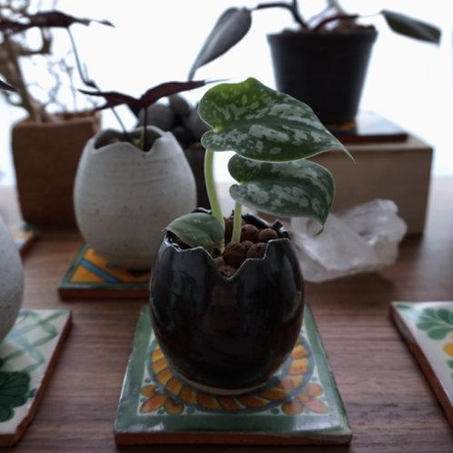 """""""Rebirth"""" Ceramic Series - Satin Pothos Quaint"""