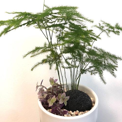 Keshiki Series - Bamboo Forest