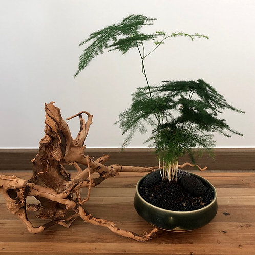 Ceramic Works - Bamboo Forest 3