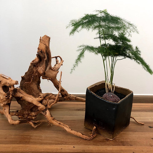 Ceramic Works - Bamboo Forest 1