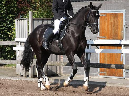equestrian-1308457__480.jpg