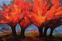 Огненные деревья. 2017