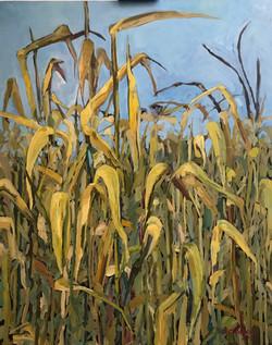 Кукуруза. 2019