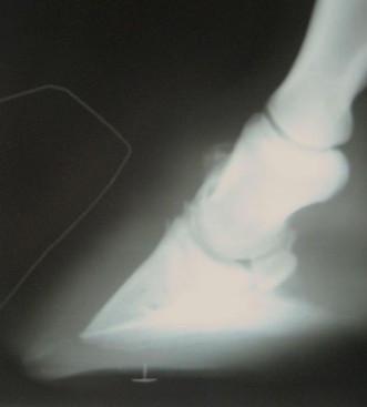 February 2010 Radiographs