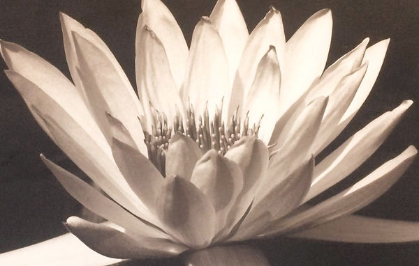 salon - water lily black & white_edited_