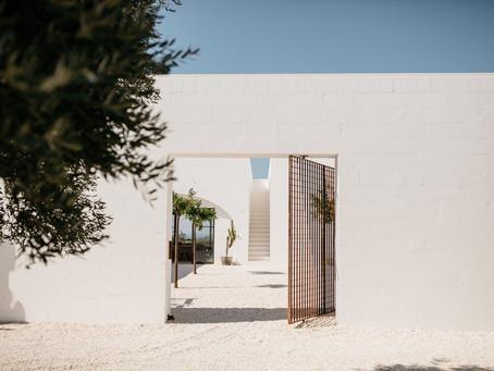 SAVOIR VIVRE: trees of OLIVES + olive SEAS