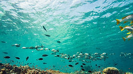 Enjoy dives even more when you can recognize and identify fish families and their characteristics.