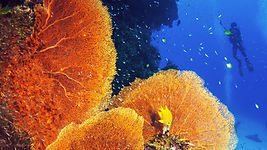 This course helps you appreciate the complexity of coral reef habitats and teaches how you can help conserve these vital systems.