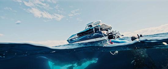 Whale Swim.jpg