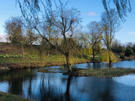 SPRING AT WILLOW LAKES