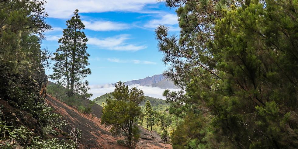 La Palma  - was brauchst Du? (1)