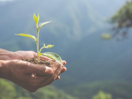 Entenda como o aquecimento global afeta a qualidade dos alimentos e da água
