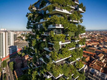 Má manutenção das florestas verticais traz problema para moradores, entenda