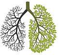 poumon arbre.JPG