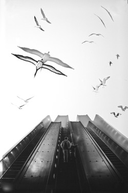 escalator 2014