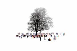 The Last tree - 2018