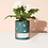Thumbnail: Modern Sprout | Waxed Planter