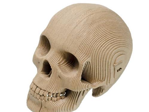 Cardboard Safari | Cardboard Animal Micro Vince Cardboard Skull